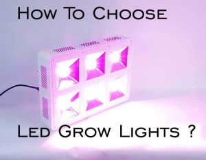 Top 3 LED grow lights for your cannabis crop