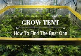 Best Grow Tents in 2019 – For Cannabis [Review]