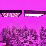 6 Best Full Spectrum LED grow Lights Reviews 2020