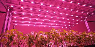 LED grow light indoor